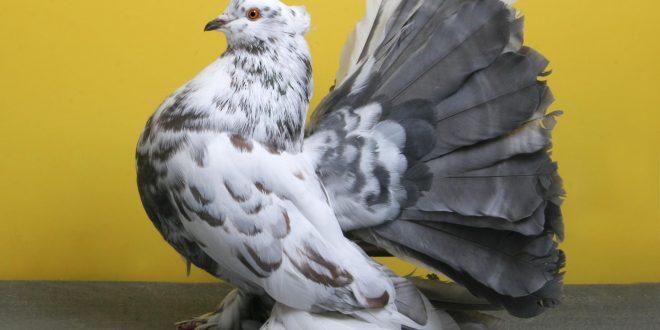 صور حمام طيور جميلة اجمل خلفيات طيور جارحة طيور جميلة 5
