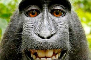 صور حيوانات مضحكة 5