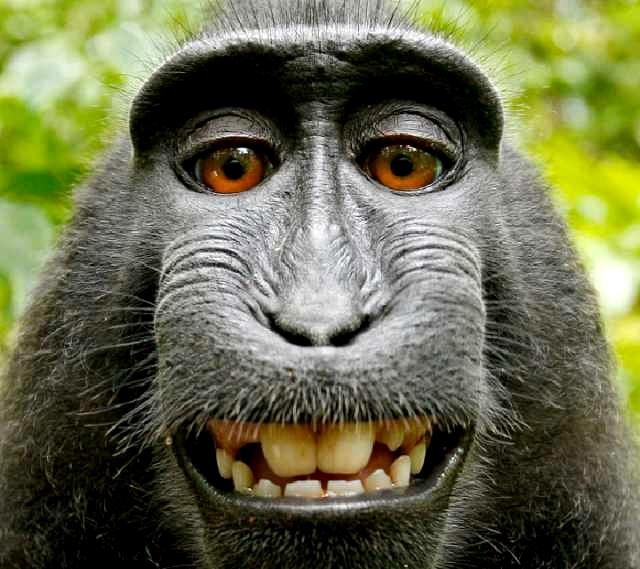 صور حيوانات مضحكة صور حيوانات جميلة 2020 صورميكس