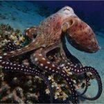 أخطبوط تعرف على أنواع الاخطبوط وحياتة صور ميكس 1