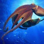 أخطبوط تعرف على أنواع الاخطبوط وحياتة صور ميكس 34