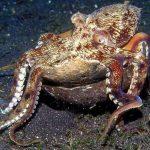 أخطبوط تعرف على أنواع الاخطبوط وحياتة صور ميكس 6