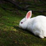 ارانب 2019 معلومات كاملة عن الأرانب صور ميكس 1