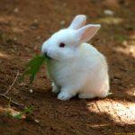 ارانب 2019 معلومات كاملة عن الأرانب صور ميكس 10