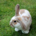 ارانب 2019 معلومات كاملة عن الأرانب صور ميكس 12