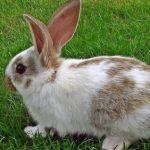 ارانب 2019 معلومات كاملة عن الأرانب صور ميكس 15