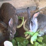 ارانب 2019 معلومات كاملة عن الأرانب صور ميكس 17