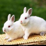 ارانب 2019 معلومات كاملة عن الأرانب صور ميكس 19