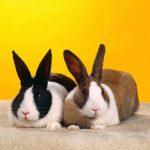 ارانب 2019 معلومات كاملة عن الأرانب صور ميكس 2