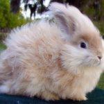 ارانب 2019 معلومات كاملة عن الأرانب صور ميكس 23