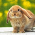 ارانب 2019 معلومات كاملة عن الأرانب صور ميكس 24