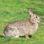 ارانب 2019 معلومات كاملة عن الأرانب صور ميكس 25