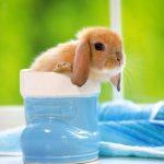 ارانب 2019 معلومات كاملة عن الأرانب صور ميكس 27