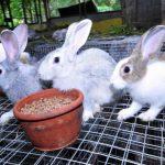 ارانب 2019 معلومات كاملة عن الأرانب صور ميكس 30