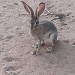 ارانب 2019 معلومات كاملة عن الأرانب صور ميكس 31