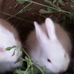 ارانب 2019 معلومات كاملة عن الأرانب صور ميكس 32