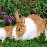 ارانب 2019 معلومات كاملة عن الأرانب صور ميكس 36