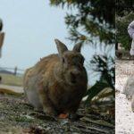 ارانب 2019 معلومات كاملة عن الأرانب صور ميكس 38