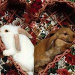 ارانب 2019 معلومات كاملة عن الأرانب صور ميكس 39