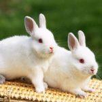ارانب 2019 معلومات كاملة عن الأرانب صور ميكس 6