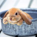 ارانب 2019 معلومات كاملة عن الأرانب صور ميكس 7