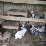 ارانب 2019 معلومات كاملة عن الأرانب صور ميكس 8