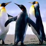 بطريق وحياة وأنواع البطاريق كاملة صور ميكس 1