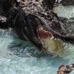 تمساح ومعلومات عن حياة وأنواع التماسيح صور ميكس 4