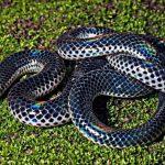 ثعبان 2019 تعرف على الثعابين وحياتها صور ميكس 16