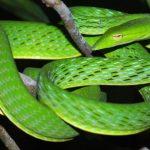 ثعبان 2019 تعرف على الثعابين وحياتها صور ميكس 20