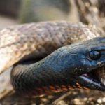 ثعبان 2019 تعرف على الثعابين وحياتها صور ميكس 28