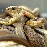 ثعبان 2019 تعرف على الثعابين وحياتها صور ميكس 3