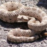 ثعبان 2019 تعرف على الثعابين وحياتها صور ميكس 32