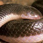 ثعبان 2019 تعرف على الثعابين وحياتها صور ميكس 33