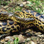 ثعبان 2019 تعرف على الثعابين وحياتها صور ميكس 34