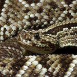 ثعبان 2019 تعرف على الثعابين وحياتها صور ميكس 36
