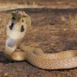 ثعبان 2019 تعرف على الثعابين وحياتها صور ميكس 37
