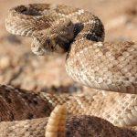 ثعبان 2019 تعرف على الثعابين وحياتها صور ميكس 38