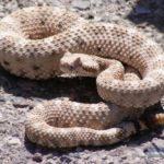 ثعبان 2019 تعرف على الثعابين وحياتها صور ميكس 8