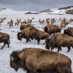 ثور 2019 ومعلومات عن حياة الثور صور ميكس 24
