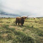 ثور 2019 ومعلومات عن حياة الثور صور ميكس 32