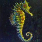 حصان البحر حياة حصان البحر وأنواعة صور ميكس 15