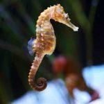 حصان البحر حياة حصان البحر وأنواعة صور ميكس 2