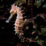 حصان البحر حياة حصان البحر وأنواعة صور ميكس 27
