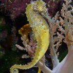 حصان البحر حياة حصان البحر وأنواعة صور ميكس 38
