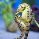 حصان البحر حياة حصان البحر وأنواعة صور ميكس 4