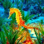 حصان البحر حياة حصان البحر وأنواعة صور ميكس 42