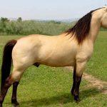 حصان 2019 أنواع الحصان ومعلومات كاملة صور ميكس 1