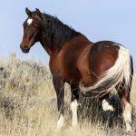 حصان 2019 أنواع الحصان ومعلومات كاملة صور ميكس 15