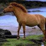 حصان 2019 أنواع الحصان ومعلومات كاملة صور ميكس 17